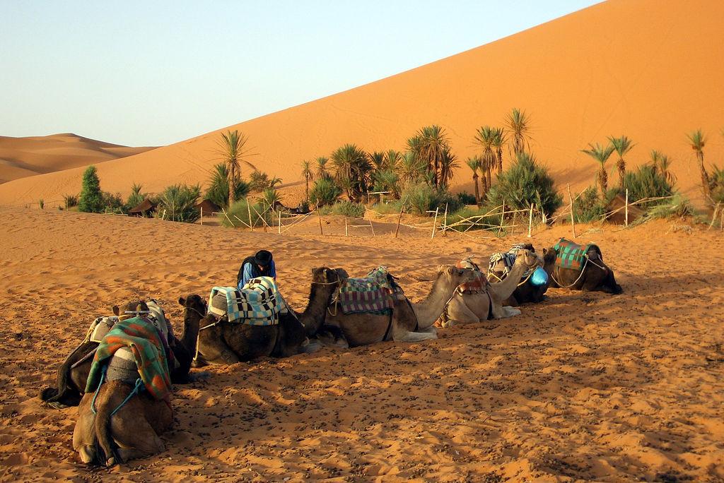Desert Caravan tour 5 days