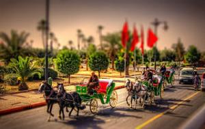Marrakech horse carriage